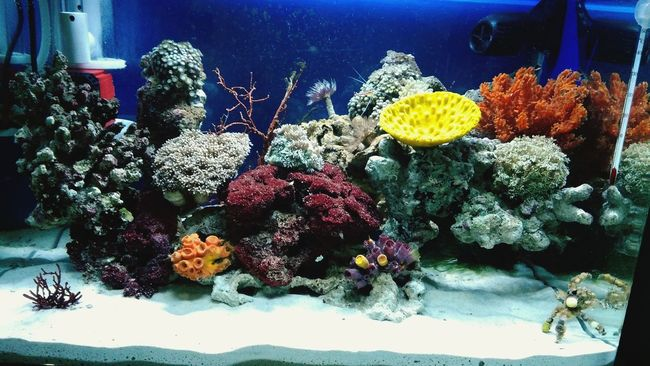 final look Saltwatertank Allshots All_shots Saltwaterfish Aquarium Marinelife Hobbies Fish Indonesia_allshots Akuarium