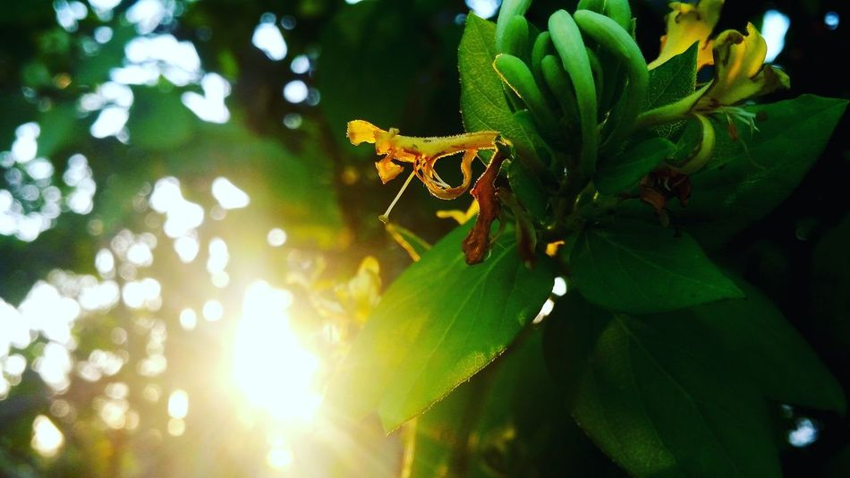 Taking Photos Nature Photography Better Look Twice Relaxing Freelance Life Instaselfie Instatraval Flowers Photography Morning Nature_collection Naturelovers Naturephotography Nature_perfection Nature_collection Landscape_collection EyeEmNatureLover