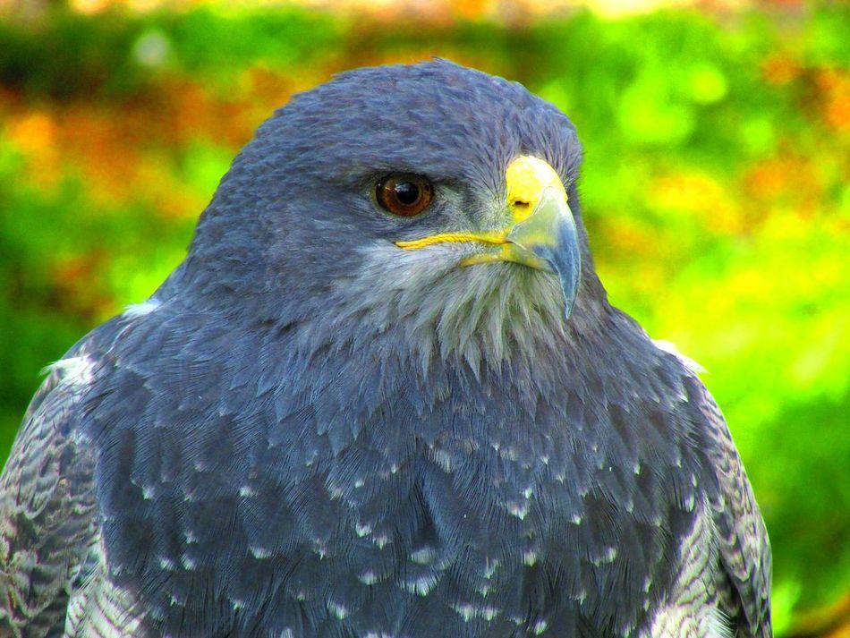 Beautiful stock photos of eagle, Animal Themes, Bird, Bird Of Prey, Day