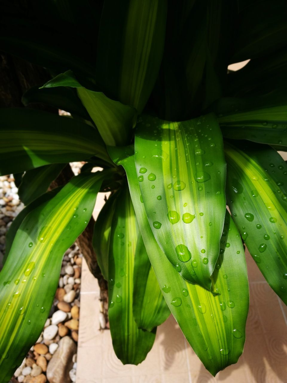 green color, growth, leaf, nature, plant, freshness, no people, beauty in nature, day, outdoors, close-up, water, fragility