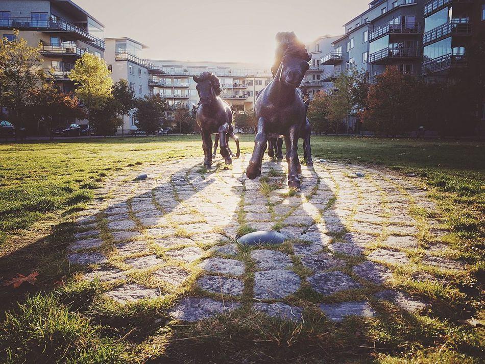 Iron horses of Finnboda Parkväg in all their glory! Iron Horses Sculpture Morning Light Morning Glory EyeEm Best Edits EyeEm Best Shots