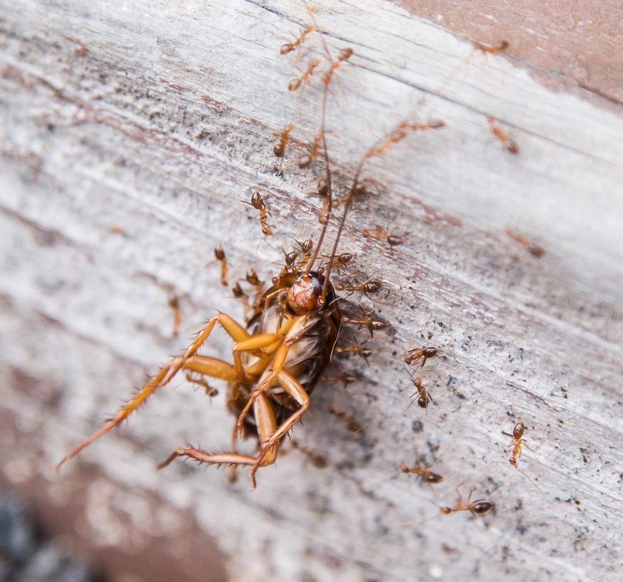 Beautiful stock photos of cockroach, Animal Themes, Animal Wildlife, Animals In The Wild, Ant