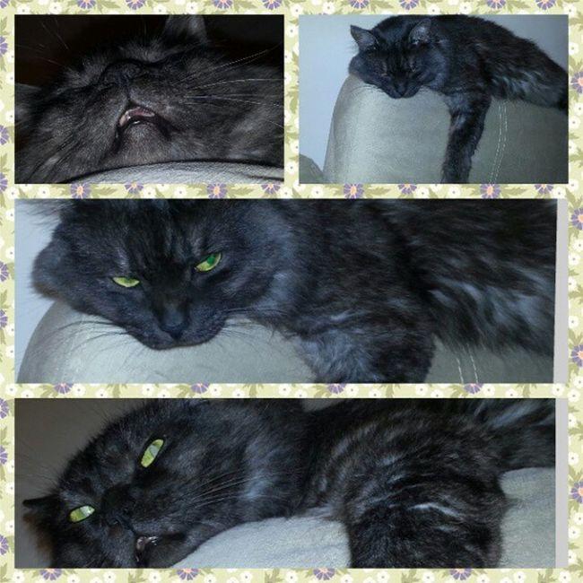 Грозный,умный, сладкий котяра мау Бусек любовь cat кот