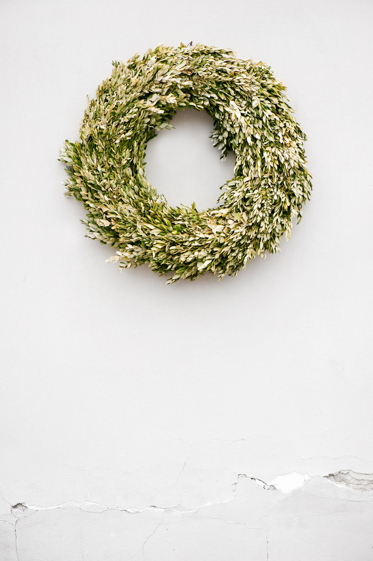 Dried Buxus wreath on white wall minimalism abstract in vertical orientation, nobody. Green wilted plant ring hanging as christmas decoration. Box Boxwood Buxus Christmas Christmas Decorations Decoration Dried Green Hang Minimalism Plant Poor  Ring Wall Weak White Wilted Wreath Xmas Xmas Decorations