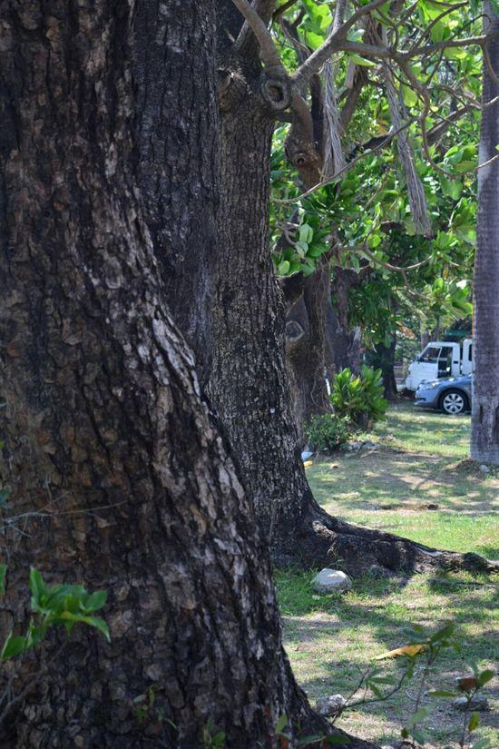 Trees Nature God'screation
