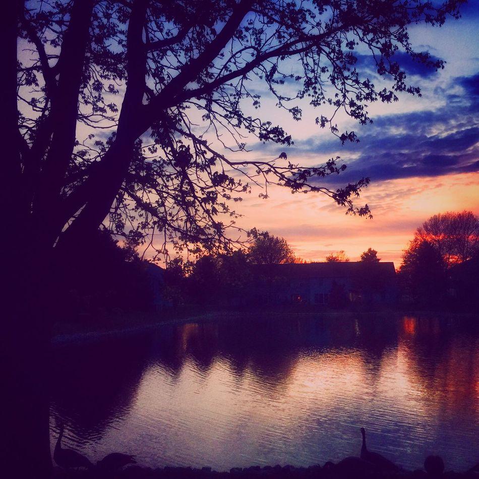 Mypond Lifeunderanoaktree Sunset Sunset Silhouettes