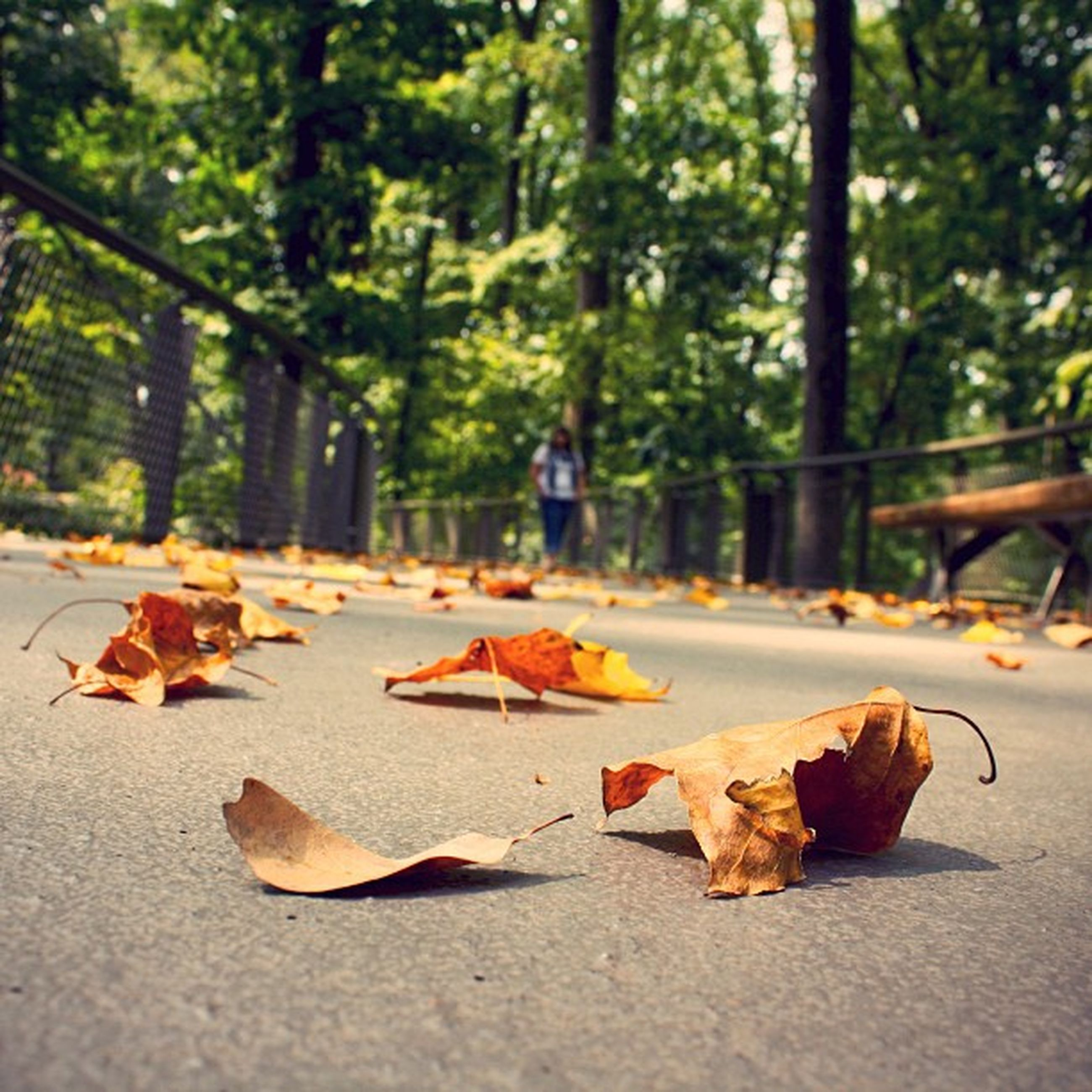 leaf, tree, autumn, change, fallen, leaves, tree trunk, park - man made space, street, season, dry, nature, day, outdoors, road, footpath, falling, sunlight, focus on foreground, incidental people