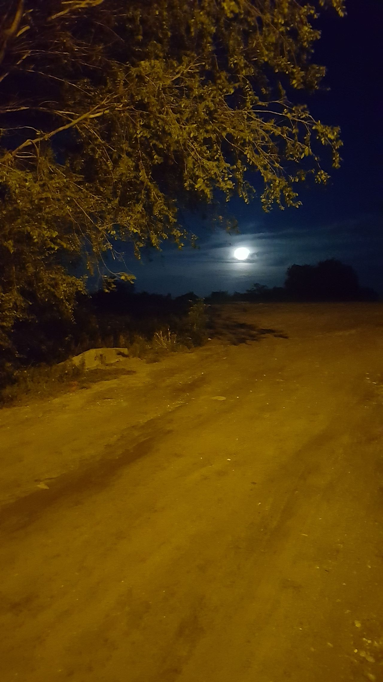 Luna Outdoors Camino Tree Night Illuminated Landscape caminando la noche Noche Nocturna