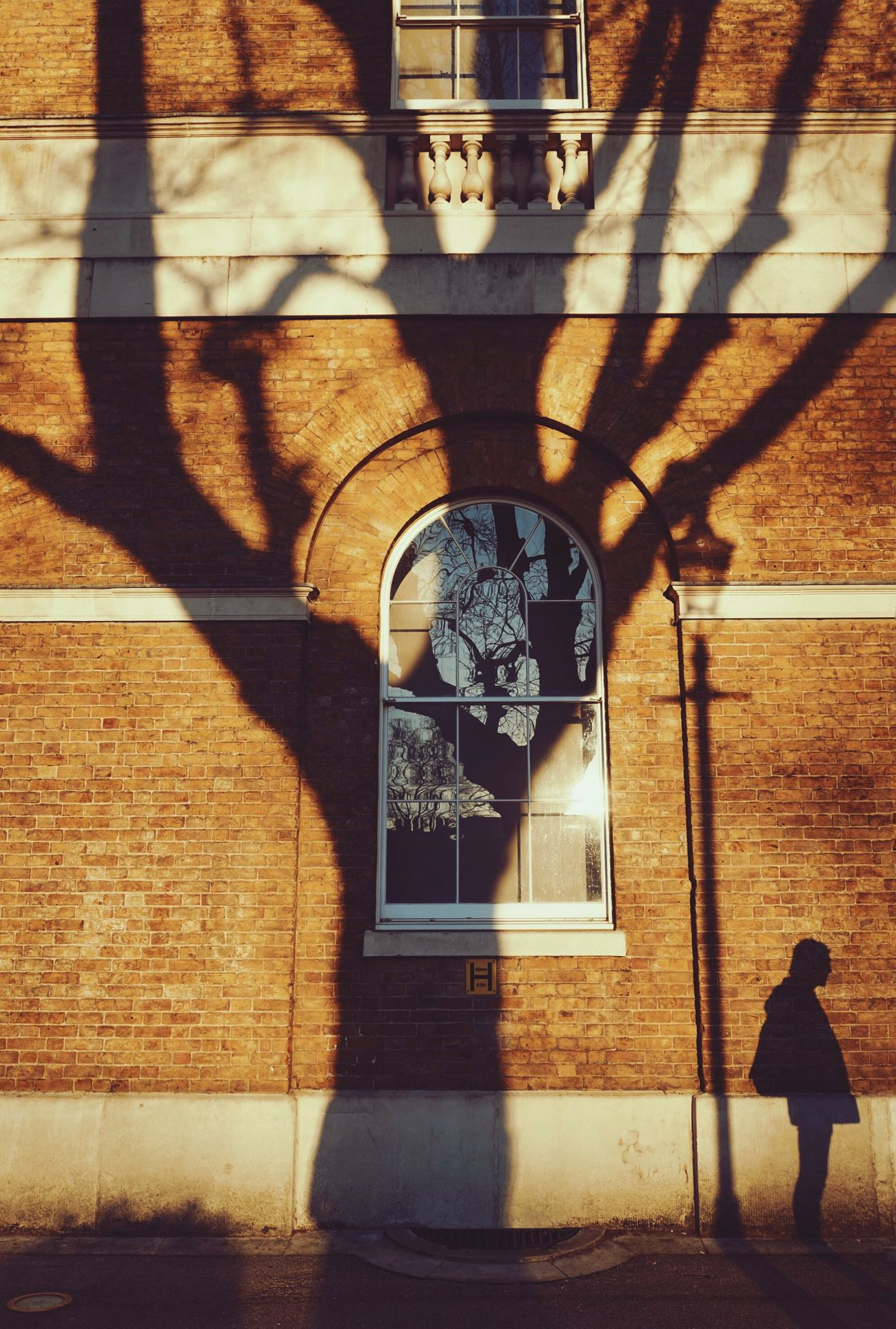 Three shadows Sunlight Architecture Shadow Street Streetphotography London EyeEm Best Shots Eyeemphoto Sony A7RII EyeEmBestPics VSCO Snapseed Chelsea Window Tree Adapted To The City