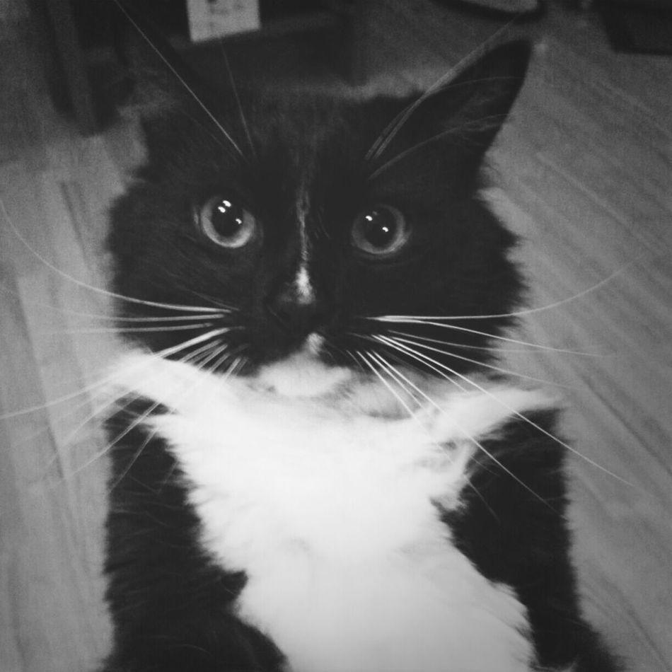 Keksas says goodmorning and whishes a beautiful day :) Cat Eyem Animal Lovers Blackandwhite Keksas