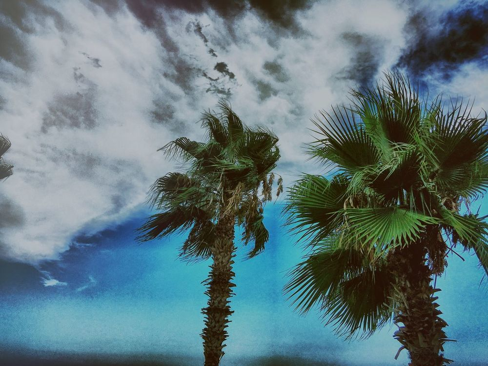 Beach Vibes. Tree Sky Blue Nature Low Angle View Cloud - Sky Beauty In Nature Day Green Palm Tree First Eyeem Photo