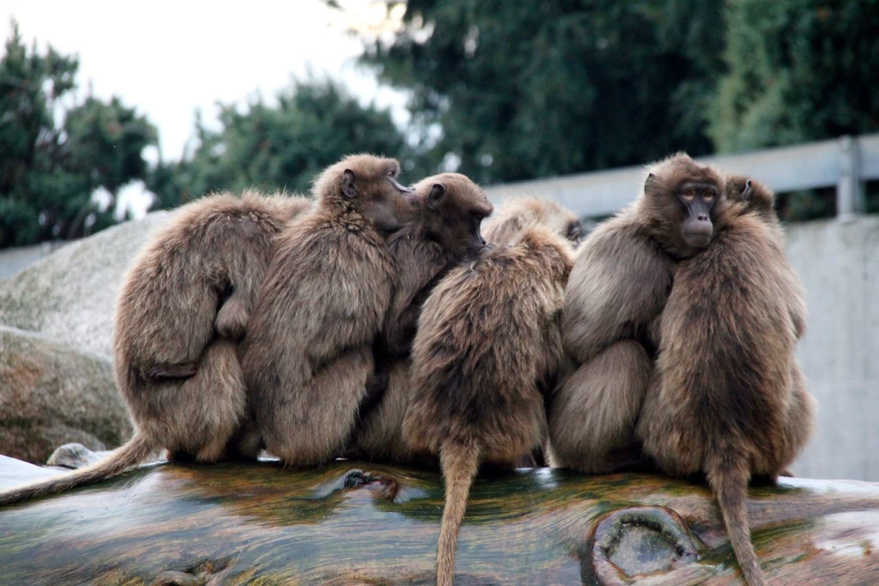 Beautiful stock photos of group, Adult Animal, Animal, Animal Behavior, Animal Hair