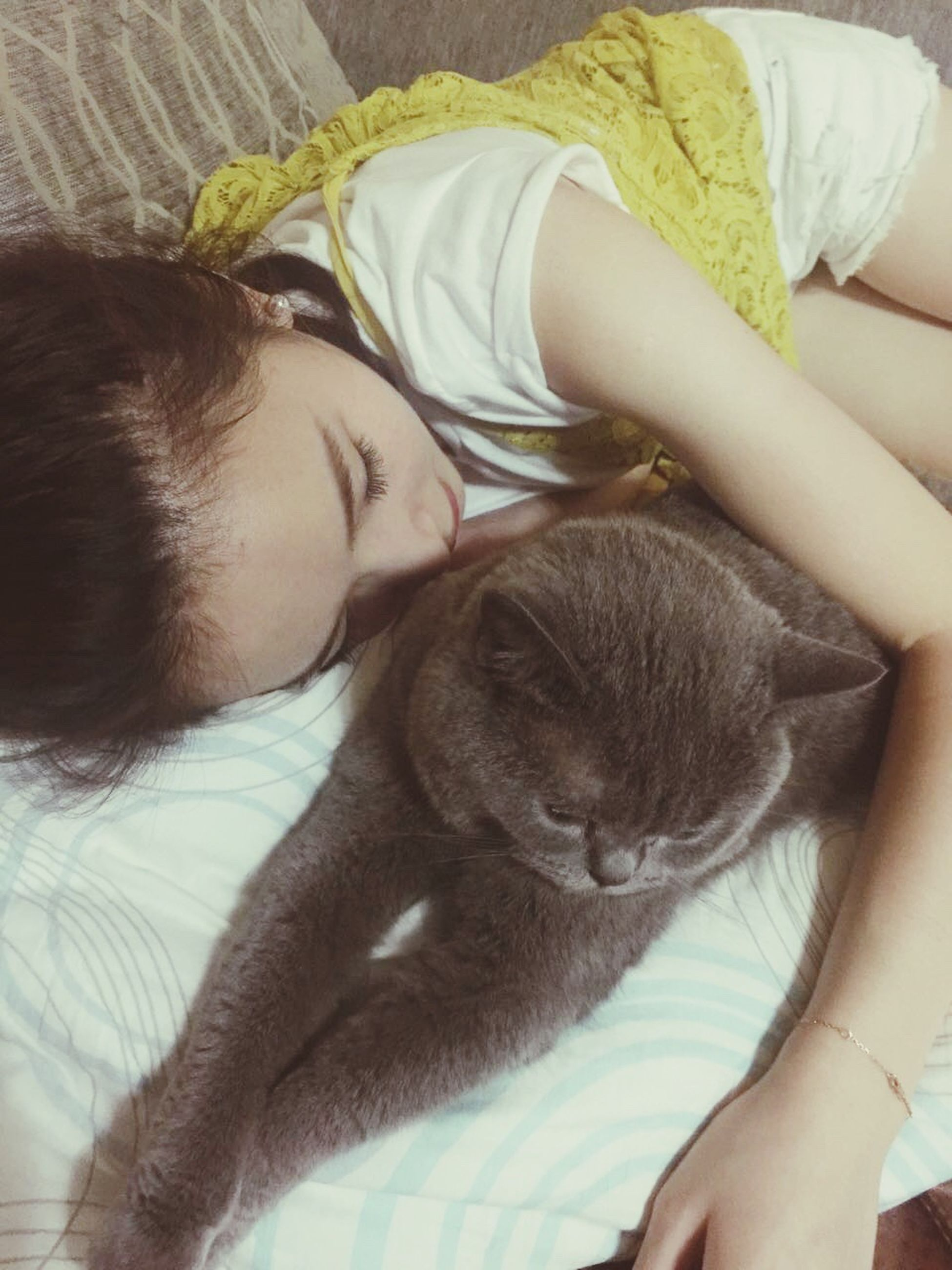animal themes, one animal, indoors, pets, mammal, domestic animals, relaxation, resting, sleeping, lying down, bed, domestic cat, cat, home interior, pet owner, eyes closed, feline, lifestyles