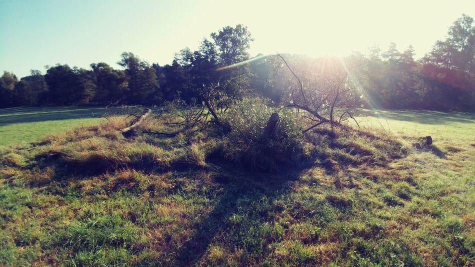 Zielen Green Natura Nature Trawa Grass Ziemia Earth Tree Drzewo Lg G5 LG  Lgg5photography Smartphonephotography Smartphone Photography