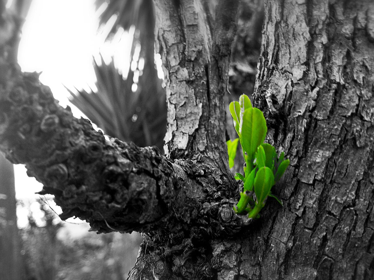 Nature Photography Blackandwhite Check This Out