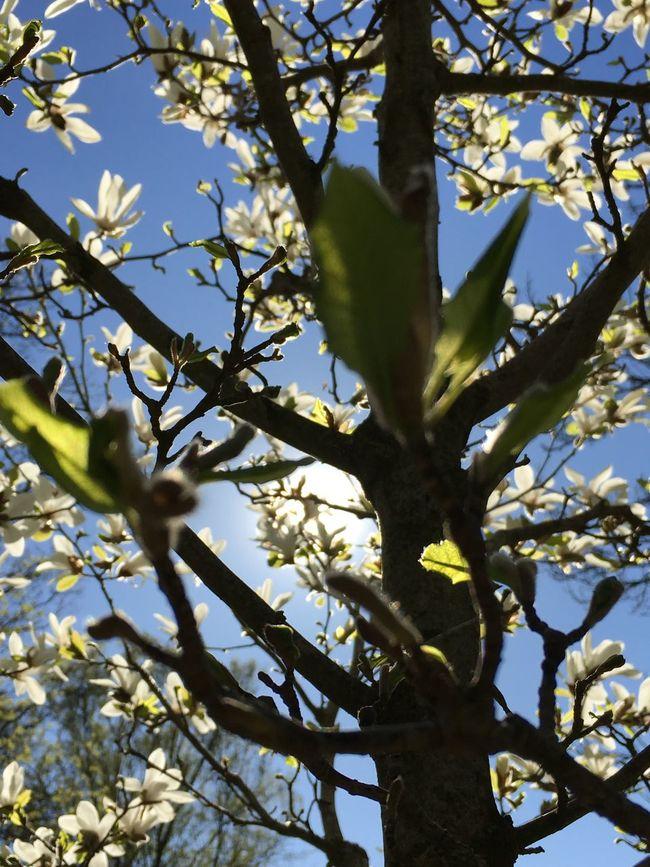 Eye4photography  Flowers EyeEm Best Shots Södermalm EyeEm Nature Lover