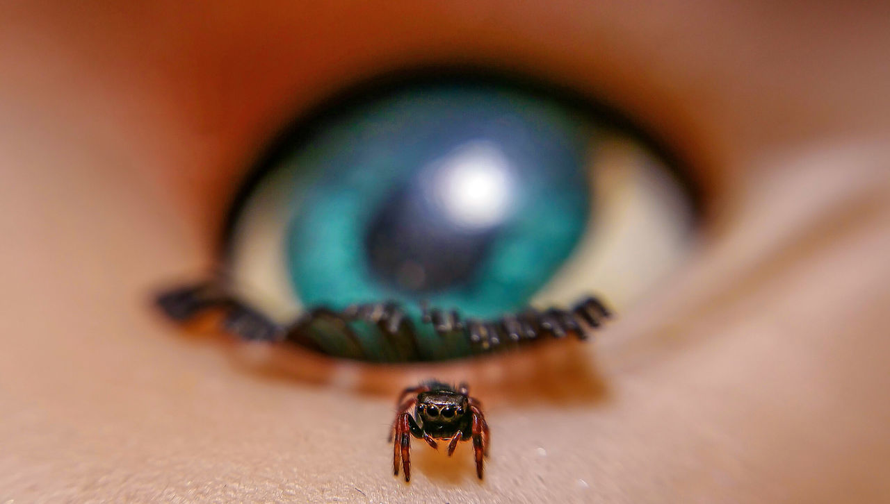 Attack Of The Macro Collection! Insect Paparazzi Macro Addict Macro Photography Spiderland Spider Portrait Spider Spiderworld EyeEm Macro Macro Arachnophobia Macro_collection Spiderama Bug Portrait