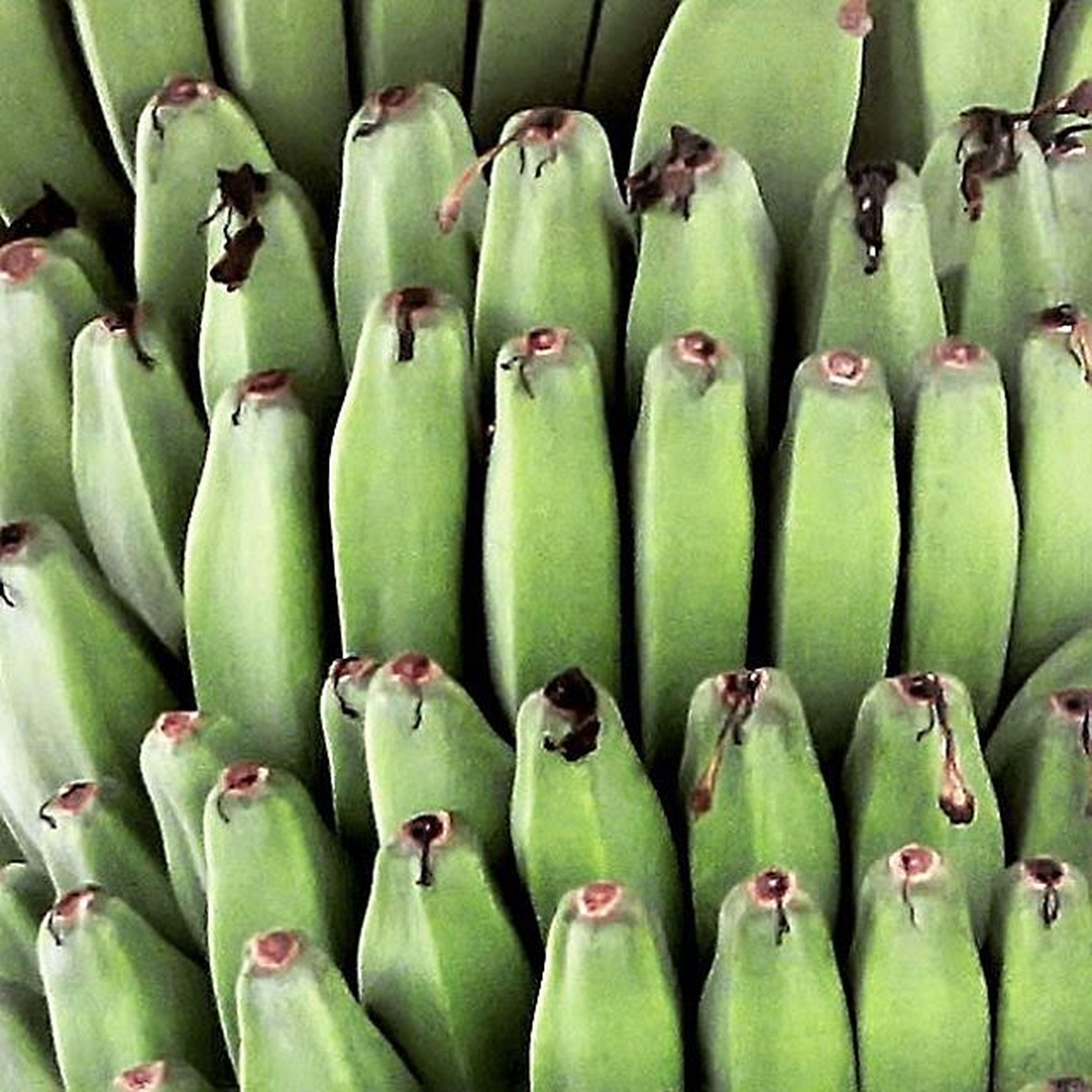 Nature of regularity. Nature Naturephotography Fruits Banana Pisang Pisangbali Kepokbali Green Nice Cool Regular Photooftheday