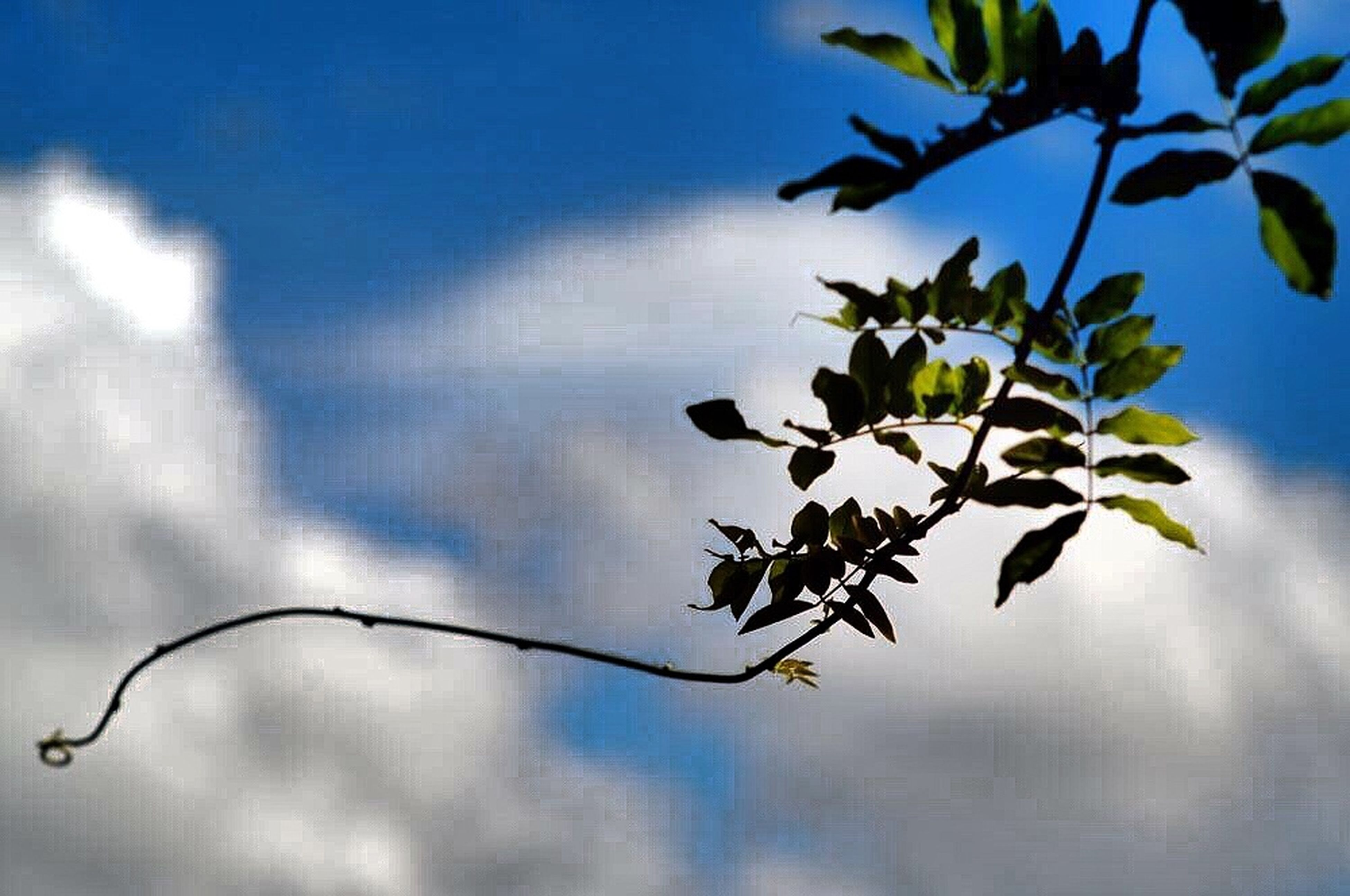 low angle view, branch, growth, leaf, nature, twig, sky, stem, plant, tree, beauty in nature, focus on foreground, close-up, freshness, flower, fragility, no people, day, outdoors, bud