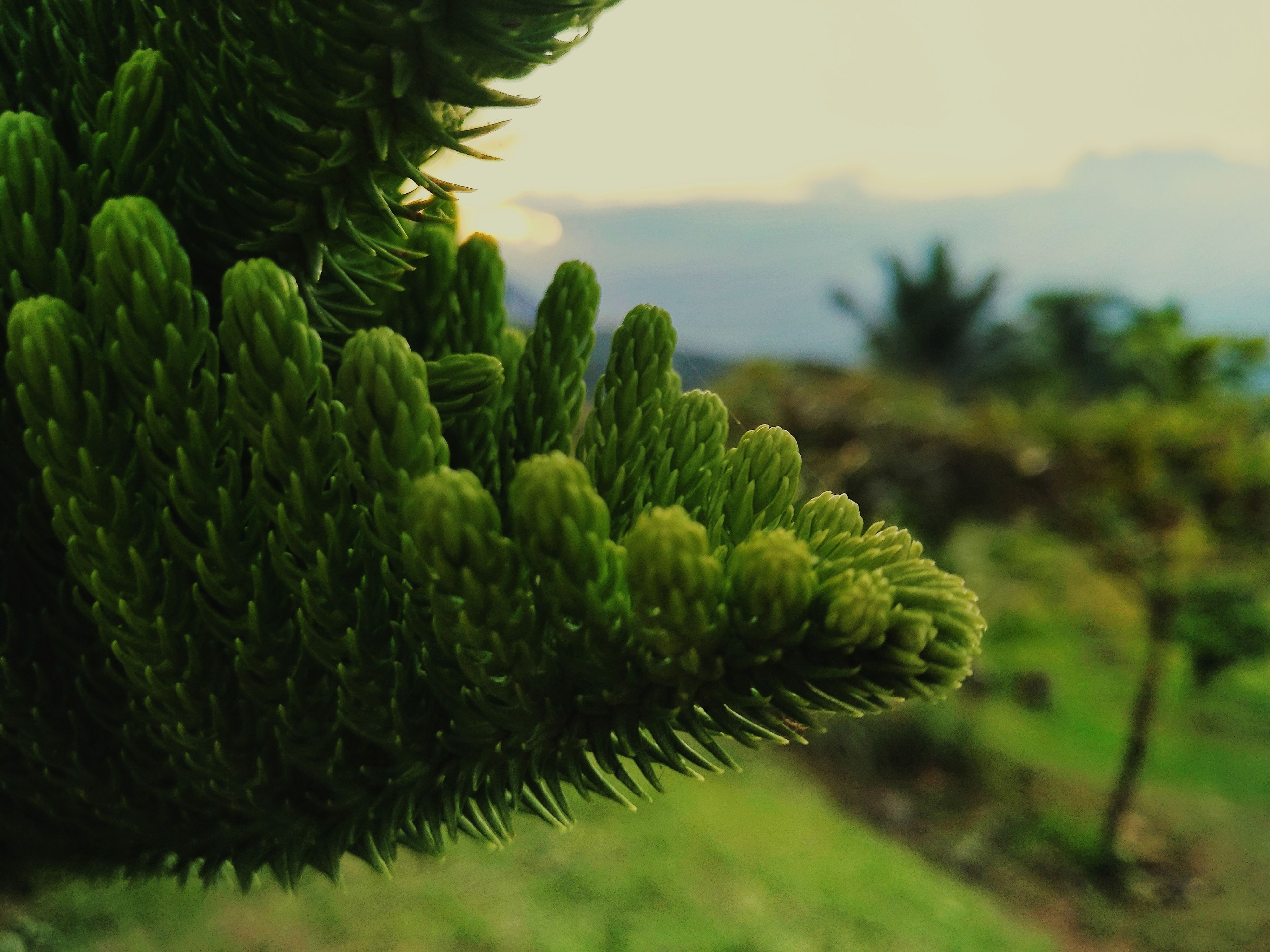 growth, nature, plant, focus on foreground, green color, beauty in nature, fern, no people, tranquility, close-up, outdoors, scenics, day, freshness