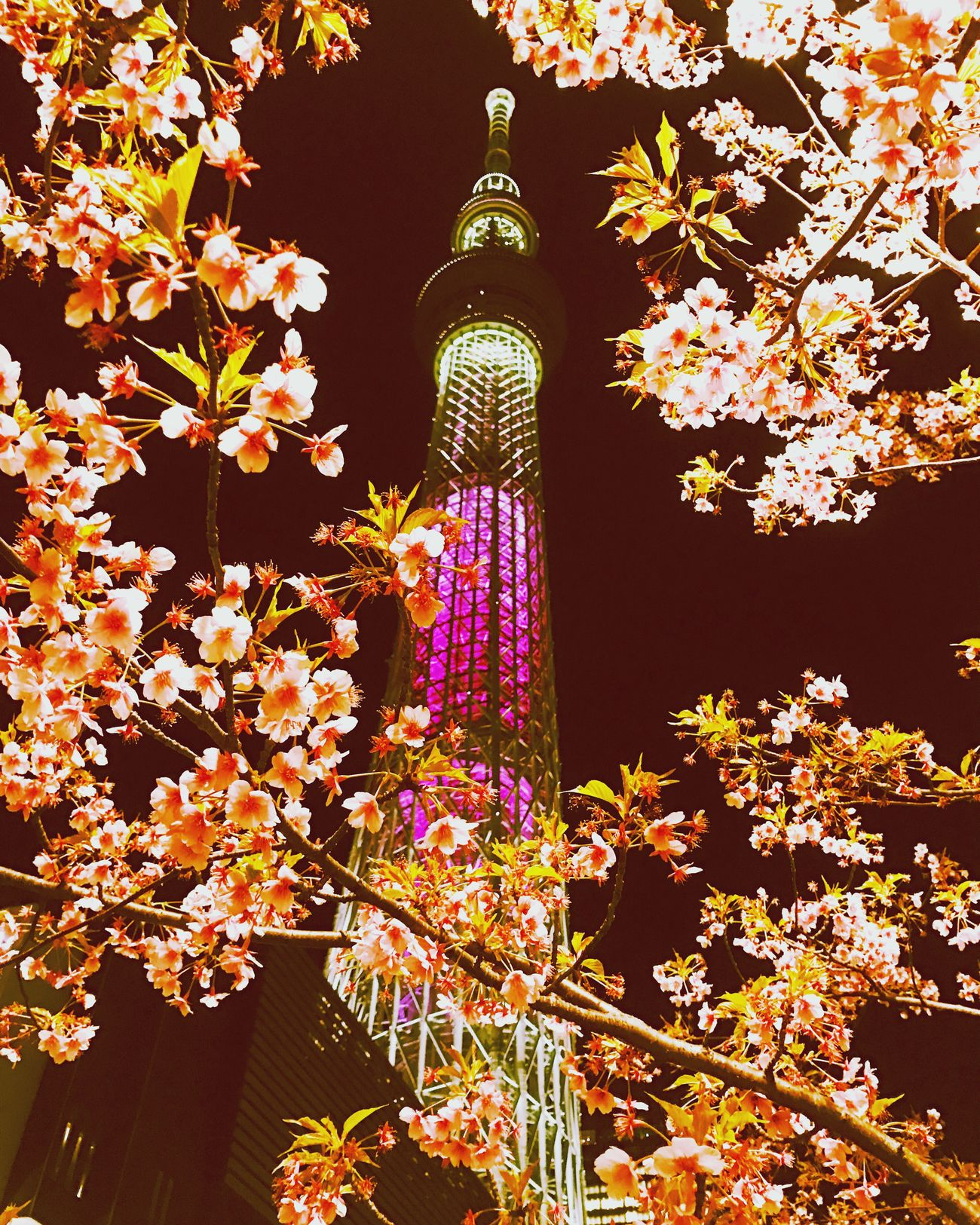Tower Architecture No People City Travel Destinations Flower Clock Tower Clock Nature Beauty In Nature Outdoors Cultures Night スカイツリー 東京