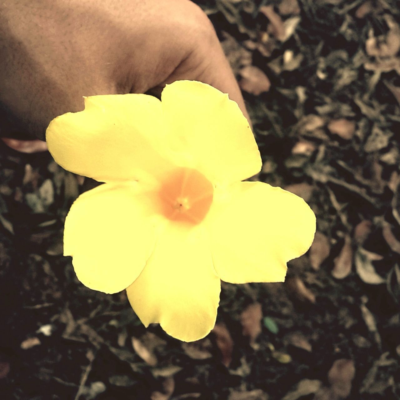 Look at the stars, Look how they shine for you, And everything you do, Yeah, they were all yellow.… Yellow Nature Flower Human Hand Beauty In Nature Close-up Coldplay Coldplay Concert  First Eyeem Photo