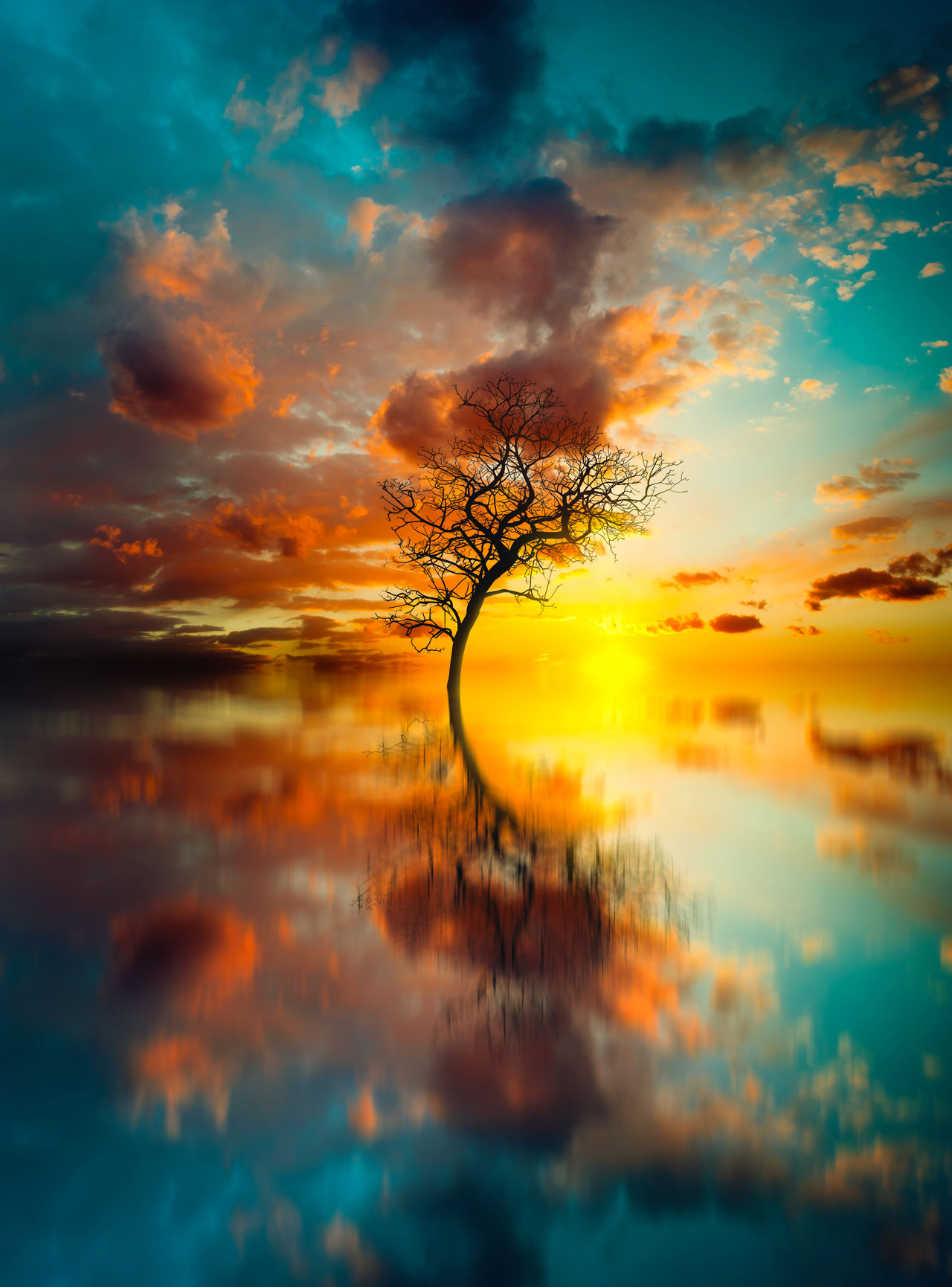 Beauty In Nature Close-up Cloud - Sky Dramatic Sky Furstset Landscape Nature Nature No People Outdoors Reflection Reflection Scenics Sea Silhouette Sky Succes Success Successful Sunset Tree Tree Water Water Reflections Wilderness