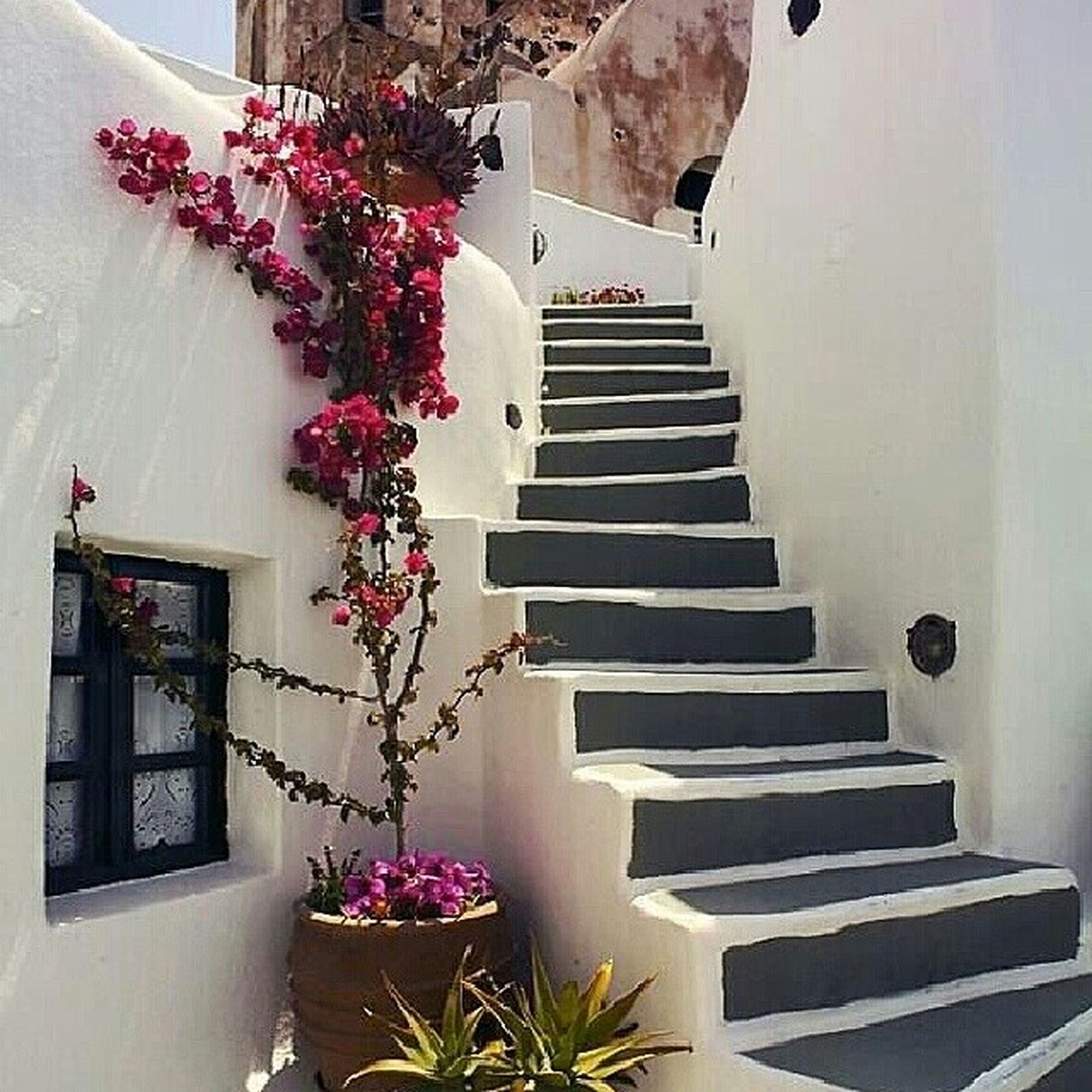 architecture, built structure, flower, building exterior, steps, staircase, steps and staircases, low angle view, house, growth, plant, potted plant, railing, building, residential structure, no people, residential building, day, sunlight, outdoors
