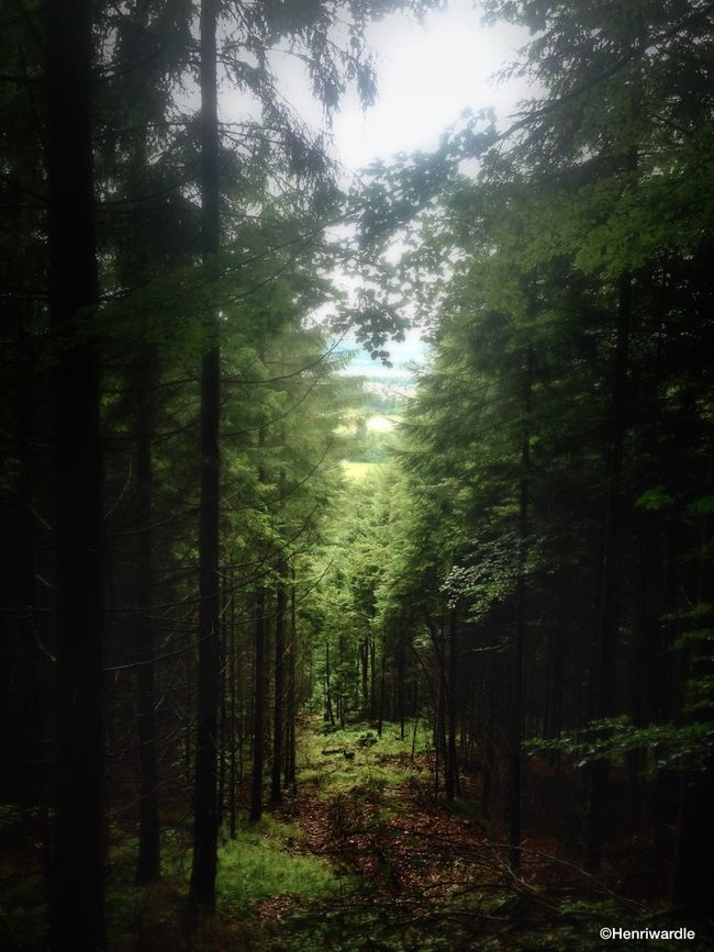 Bavaria, Germany Forest Nature Trees Pine Trees