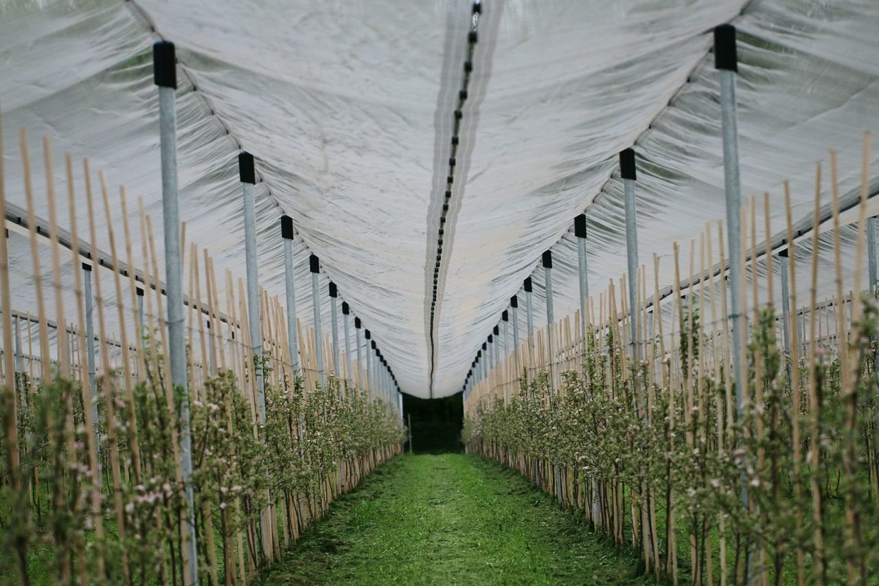 Growth Agriculture Indoors  Greenhouse No People Grass Day Plant Nursery Nature Trees Perspective Photography