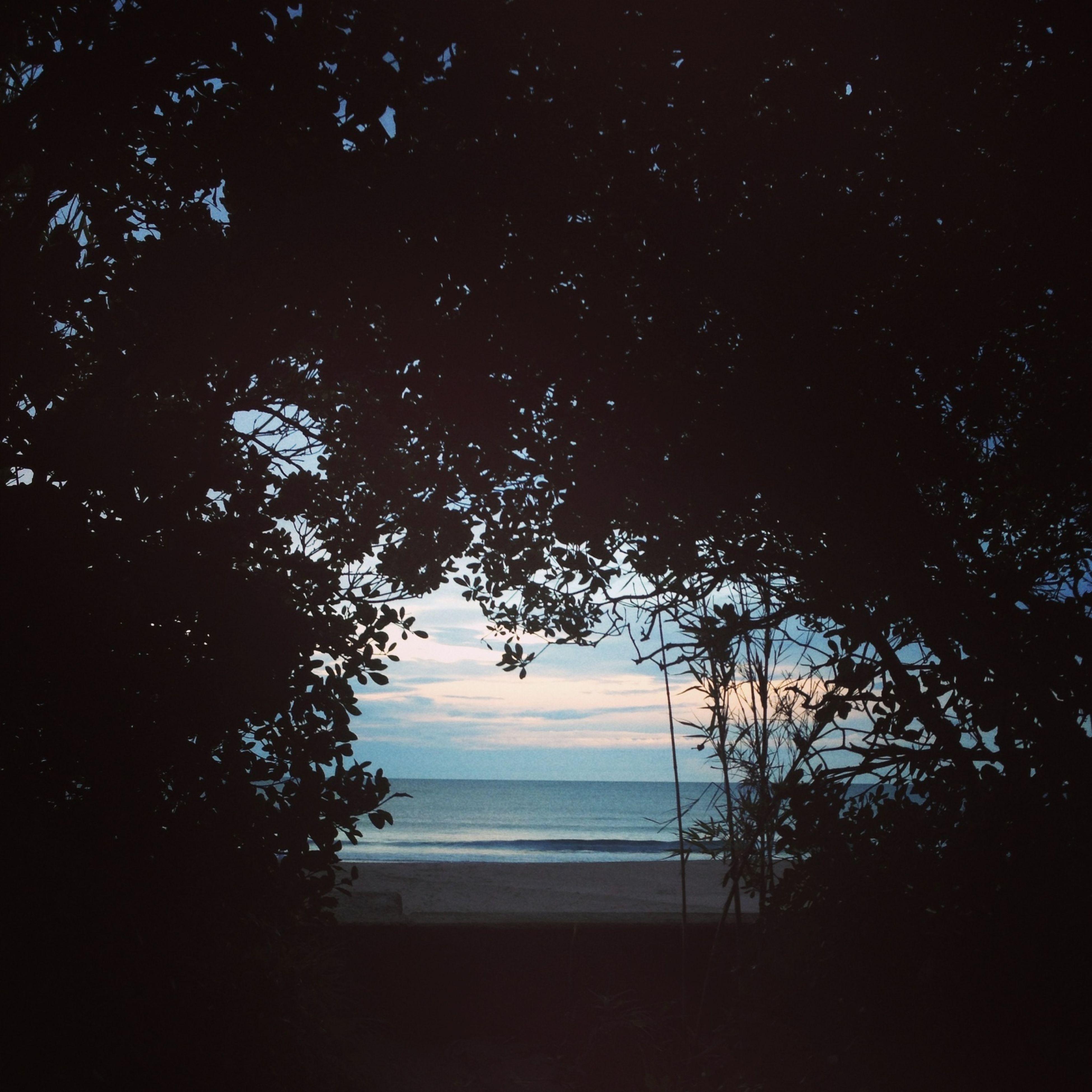 tree, tranquility, tranquil scene, scenics, beauty in nature, water, nature, sea, horizon over water, sky, silhouette, idyllic, beach, outdoors, branch, no people, non-urban scene, night, dark, growth