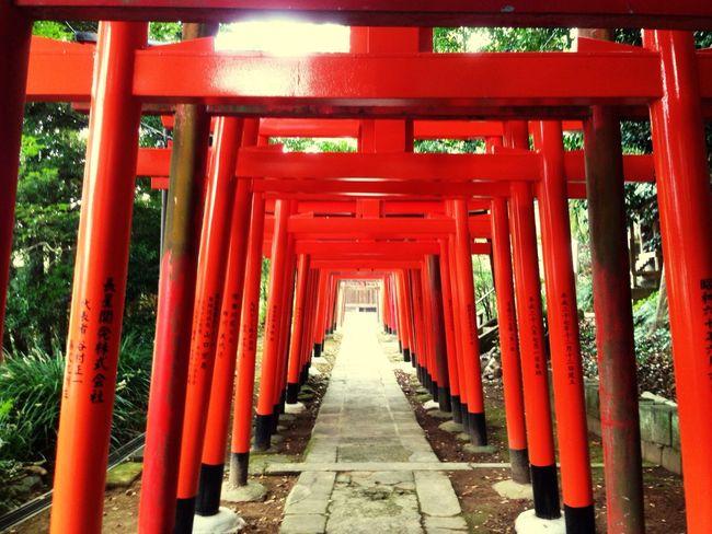 長崎市諏訪神社境内の稲荷神社前鳥居群 Red Built Structure Shrine Tradition Pray Japanese Cool Temple - Building Architecture Old Buildings