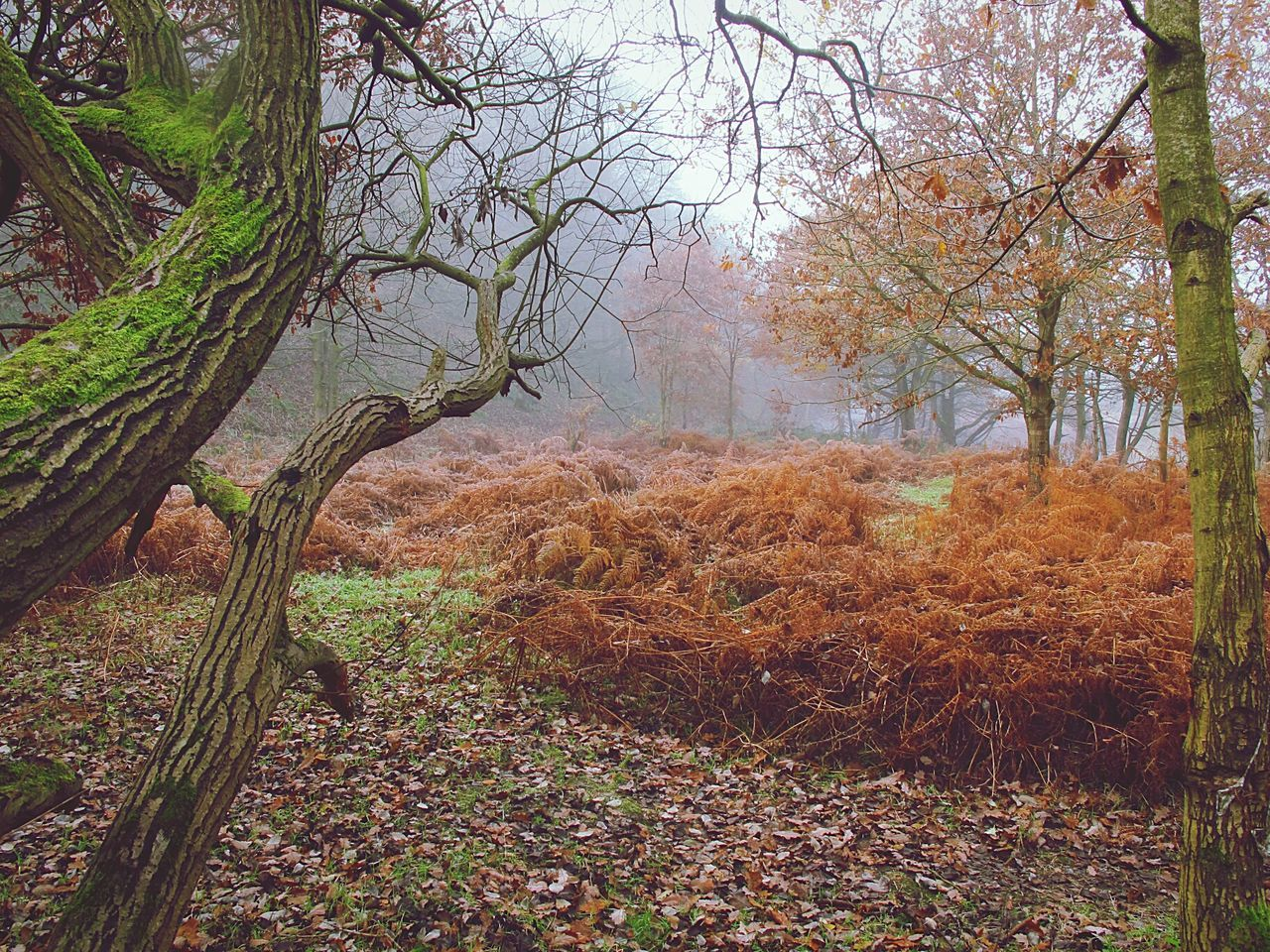Foggy Morning EyeEmbestshots Autumnbeauty Autumn Leaves Cold Temperature Fineartphotography Frosty Days Tranquil Scene EnchantedForest WoodLand Tree Trunk Outdoors Beauty In Nature Tranquility Fog Valleys Landscape Woodlands Non-urban Scene Scenics Foggymornings Winter Is Coming No People