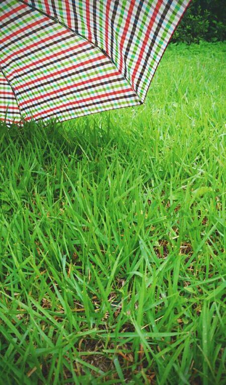 비온후의 초록초록, 내가 좋아하는 우산이랑 참 잘어울리네