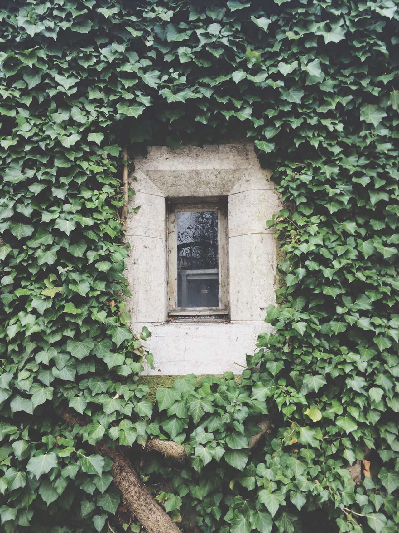 Window Ivy Hided Window Leaves Green GreenGreenGreen Bunker Military