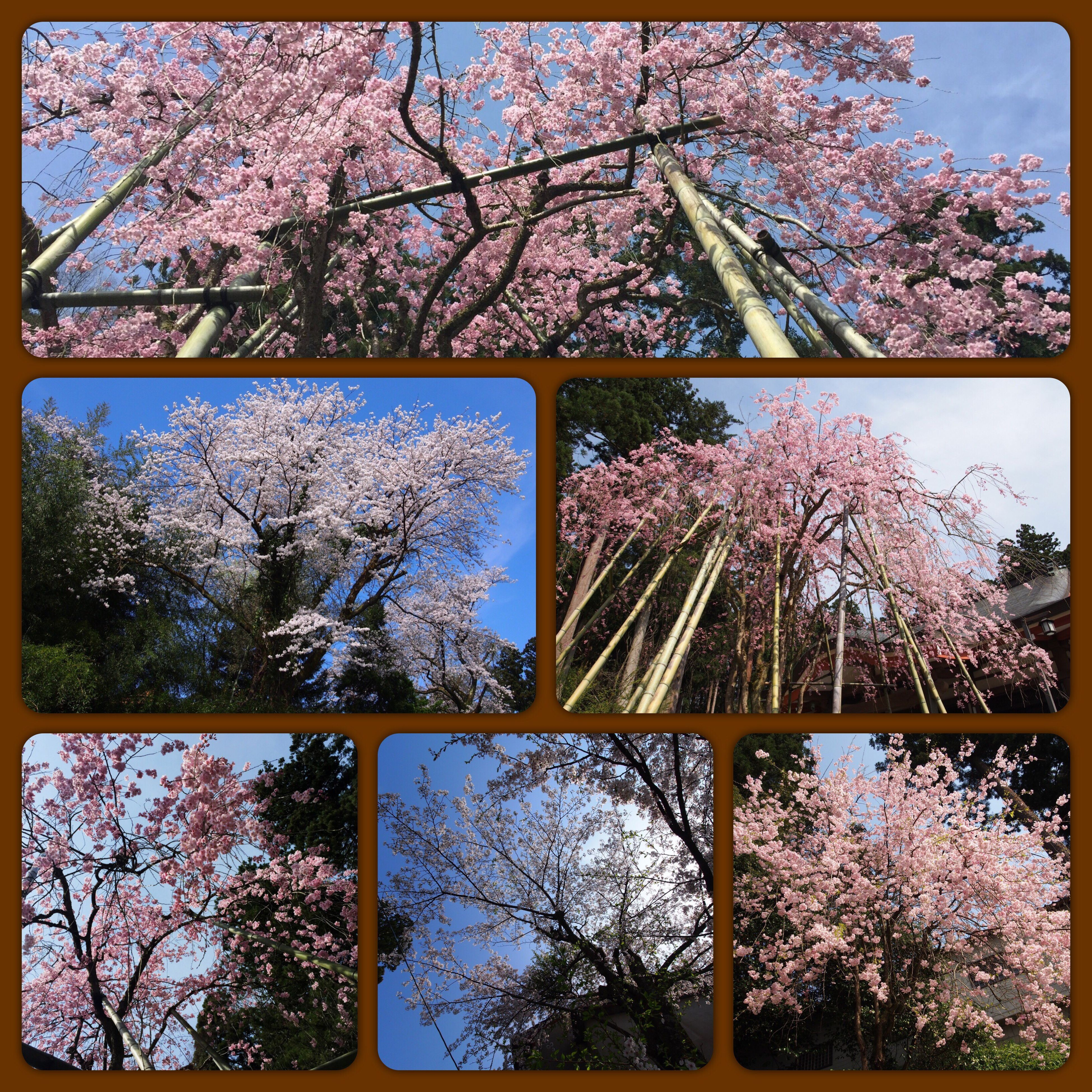 tree, sky, growth, no people, nature, day, branch, beauty in nature, outdoors, low angle view, flower, digitally generated