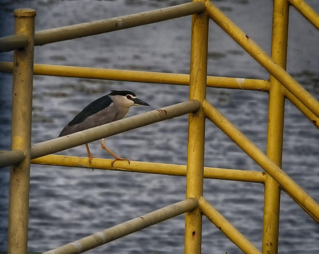 Animal Themes Bird Day Nature No People Outdoors Urban Nature Urban Wildlife