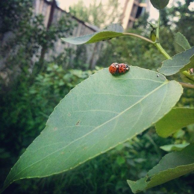Crazybug Ladybug Nature Bug bulgaria animal green bg