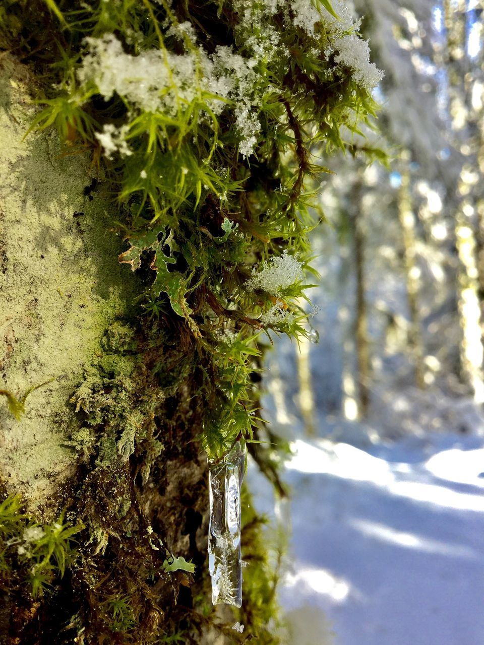 growth, nature, tree, plant, green color, no people, tree trunk, day, focus on foreground, beauty in nature, outdoors, close-up, tranquility, fern