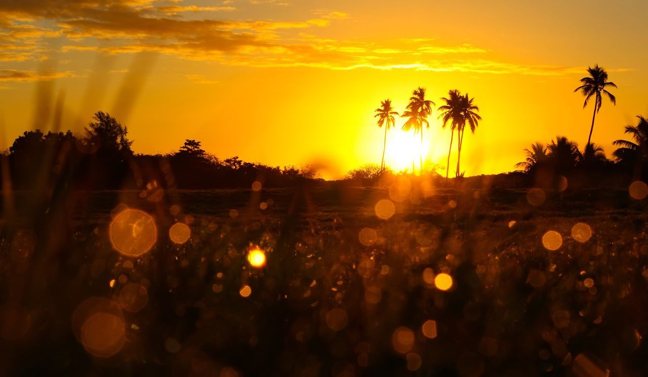 Sunrise Tree Orange Color Sky Scenics No People Outdoors Nature Sun Beauty In Nature Palm Tree Morning Dew Morning Light Golden Shimmer Dawn Dawn Of A New Day Dawn Collection Sun Glare Glare Palm Tree Silhouette Point Of View Capture The Moment