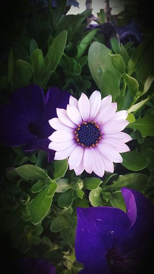 Beautiful Enjoy Nature Pastel Nature Naturehippies Flower Purple Purple Flower