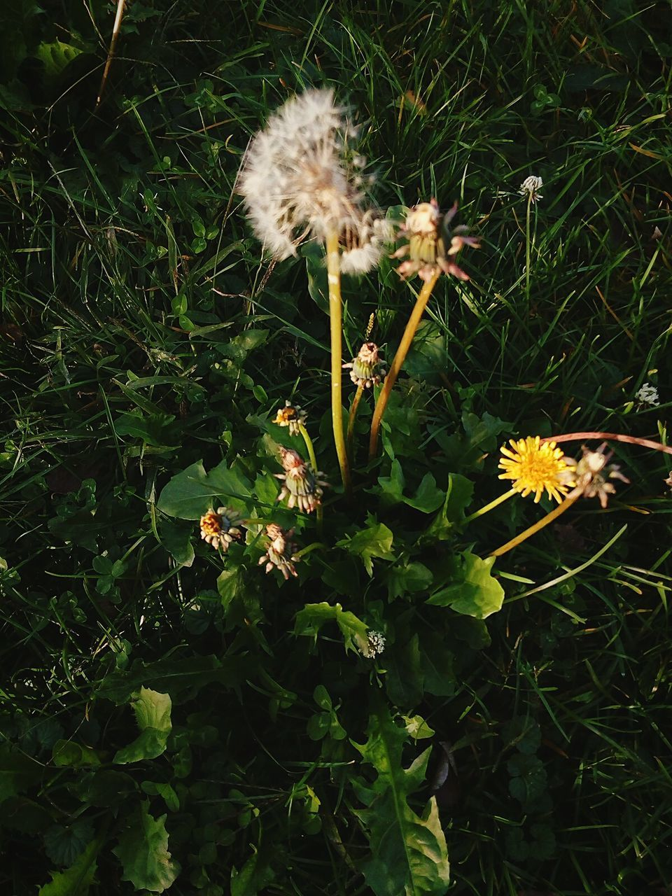 flower, growth, fragility, nature, plant, flower head, beauty in nature, freshness, petal, uncultivated, no people, outdoors, day, close-up, grass, animal themes