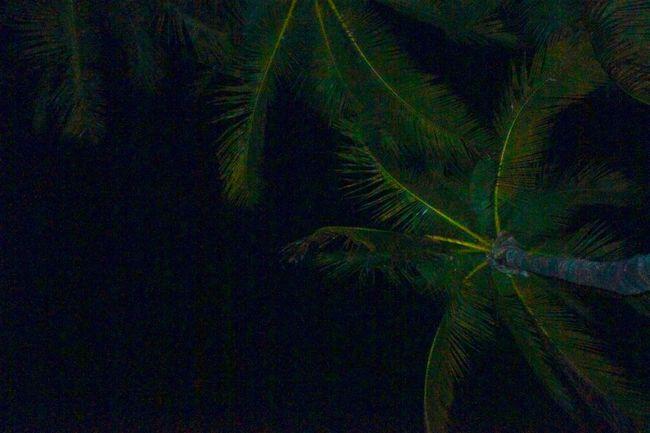 Darkkkkkk Coconut Trees Dark Darkness And Light Day EyeEm Gallery EyeEm Nature Lover EyeEm Night Shots EyeEm Nightscape Green Color Growth Leaves_collection Nature Night Night Photography Outdoors Pitch Black Popular
