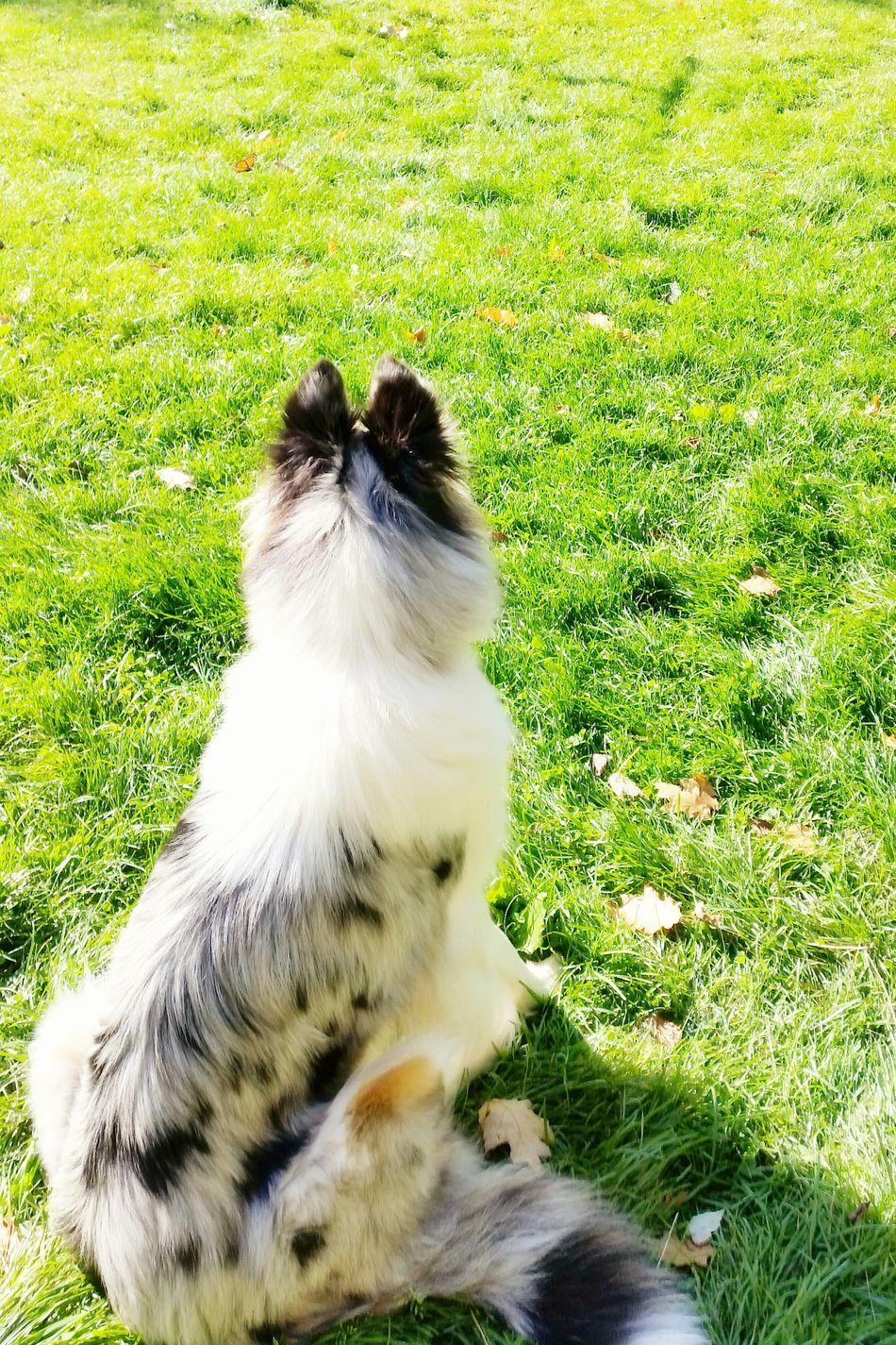 Capture The Moment Collie Pet Photography  Pets Milo & Me Butterfly