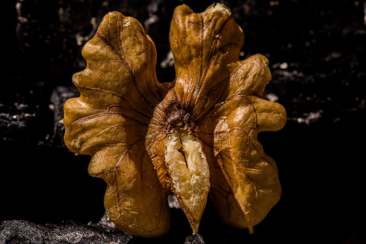 Healthy Beauty In Nature Black Background Close-up Dry Food Healthy Eating Nature No People Nut Petal Walnuss
