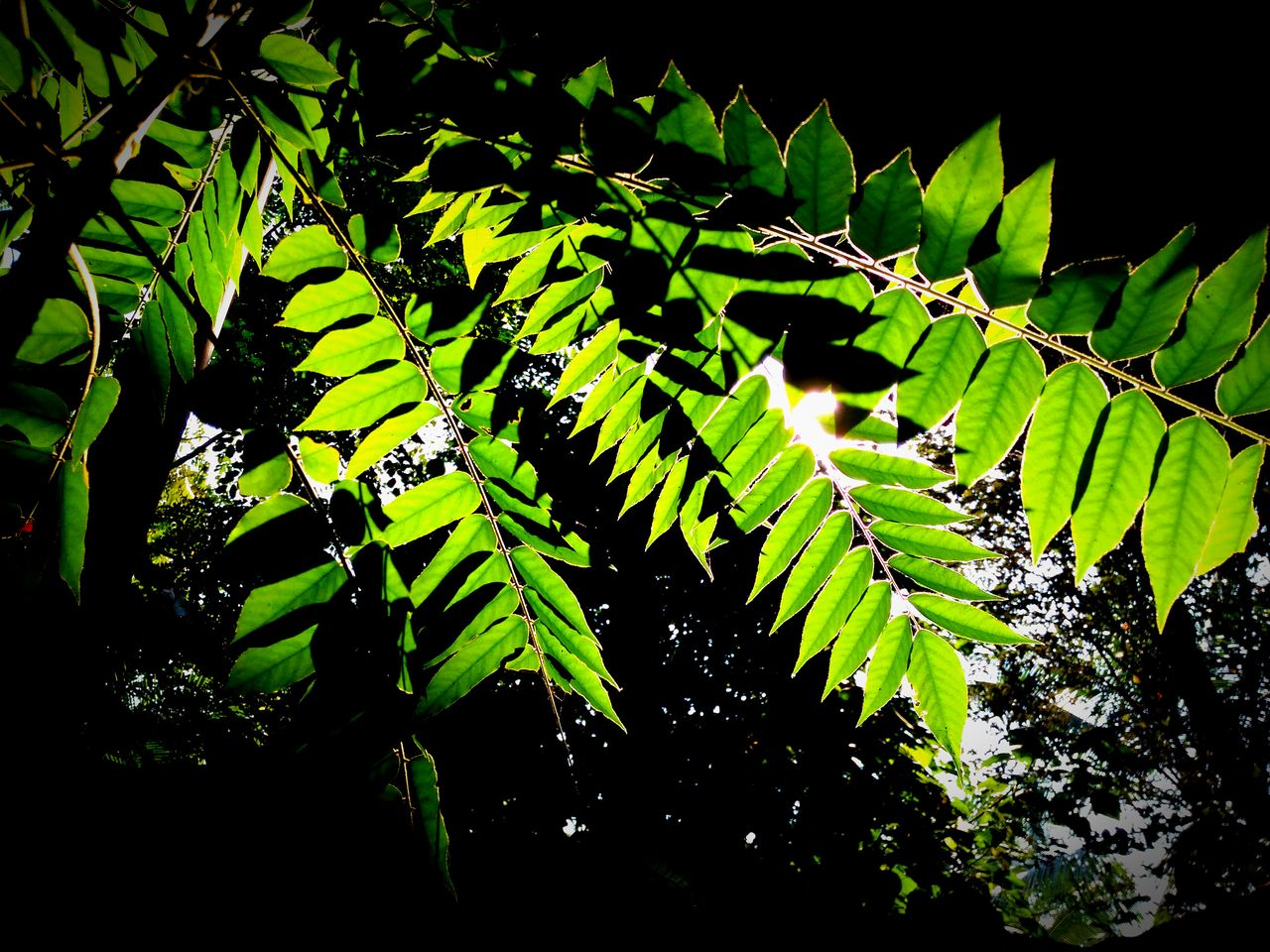 Leaf Nature Green Color Growth Black Background No People Plant Beauty In Nature Full Frame Backgrounds Outdoors Outline Light And Shadows Innovation Freshness My Point Of View My Unique Style My Smartphone Life