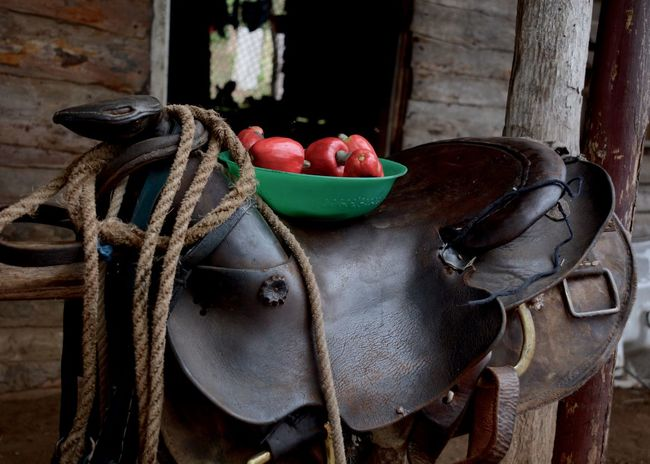 Brown Cashew Cashew Fruit Cuba Fine Art Photography Peaceful Saddle Still Life Photography StillLifePhotography Trinidad, Cuba