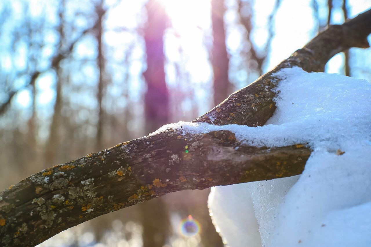 tree, snow, winter, nature, focus on foreground, day, cold temperature, tree trunk, no people, outdoors, branch, beauty in nature, tranquility, close-up, sky