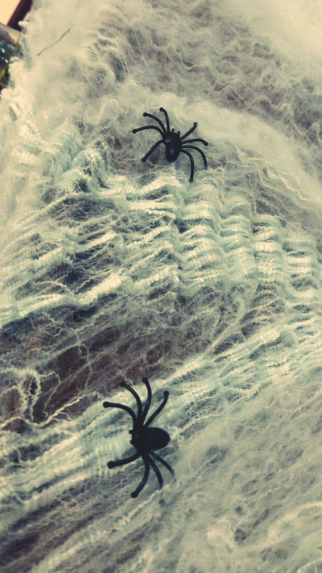 SpookyHalloween is coming Spidersweb EyeEm Gallery Capture The Moment Spiders Happy Halloween! 🎃