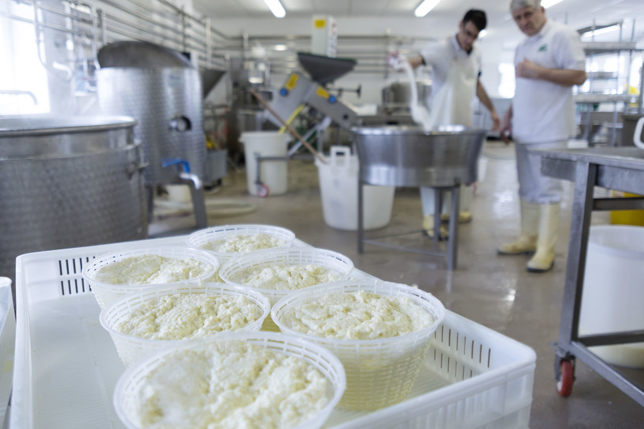 Cheese Dairy Dairy Farm Fresh Cheese  Italian Italian Cheese Italian Food Italy Making Making Cheese Milk Mozzarella People Ricotta Ricotta Cheese